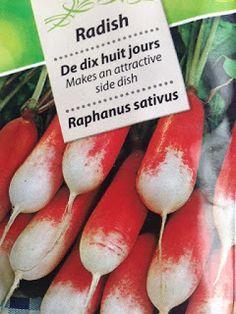 VIDA FELIZ: na Horta: Como Semear, Plantar e Colher RABANETES I