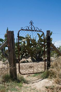 this takes me back almost 40 years - grandma had a gate like this and it would squeak every time it was opened and closed. Wonderful Places, Beautiful Places, Old Gates, South Afrika, Smell Of Rain, Farm Gate, Out Of Africa, Beaches In The World, African Countries