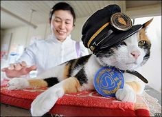 Tama was born at the station. In Japan cats are thought to be good luck. Well now...I should live in Japan then = )