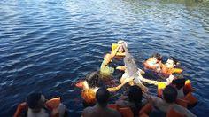 Just Go #JustGo - Sanderlei: Boto-cor-de-rosa - Manaus - Amazonas AM - Brasil