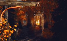 Animated gif uploaded by Aiyana. Find images and videos about gif, autumn and brown on We Heart It - the app to get lost in what you love. Autumn Nature, Autumn Leaves, Autumn Forest, Autumn Garden, Winter Gif, Beau Gif, October Country, Les Gifs, Autumn Cozy