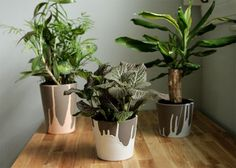 Paint Dipped Ceramic Pots via The Lovely Cupboard