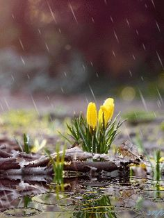 Rainy Day Pictures, Rain Pictures, Nature Pictures, Good Morning Beautiful Images, Beautiful Gif, Alone Photography, Nature Photography, Relaxing Rain Sounds, Rain Gif