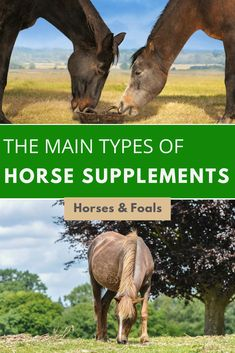 In this article, we introduce and explain the various types of horse supplements you may wish to use to provide your horse with a well-rounded diet. Western Horse Tack, Horse Barns, Western Saddles, Horse Stalls, Barrel Racing Quotes, Barrel Racing Tips, Horse Training Tips, Horse Tips, Horse Feed