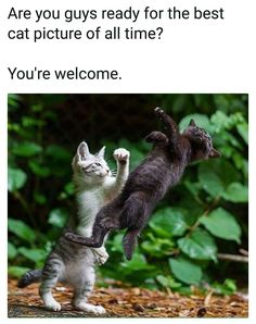 Funny Cat Memes Of The Day – 35 Pics – Lovely Animals Worl… Memes gato gracioso del día – 35 fotos – Lovely Animals World Funny Animal Jokes, Funny Cat Memes, Funny Animal Pictures, Cute Funny Animals, Animal Memes, Cute Baby Animals, Funny Humor, Funny Pics, Humor Humour