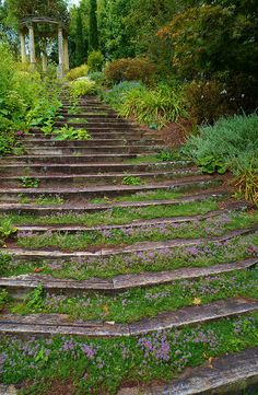 Thyme-covered steps to the Love Temple   Ayrlies Garden, Auckland, New Zealand