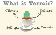What is Terroir? | Tea For Me Please: What is Terroir?