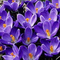 Kevätsahrami Remembrance - Viherpeukalot