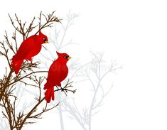 Red Cardinals Sitting In Tree vector illustration