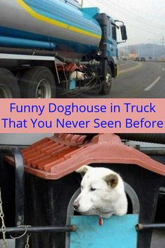 Funny Doghouse in Truck That You Never Seen Before Funny Dogs, Cute Dogs, Funny Memes, Life Memes, Dog Houses, Trucks, Humor, Humour, Dog Kennels
