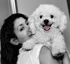 Want To Adopt A Bichon Frise Dog? Pros & Cons Of Bichon Dogs.