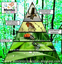 Pirâmide alimentar simples