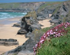 Ocean Sea:  Cliff Flowers, Bedruthan Steps, North Cornwall, England.