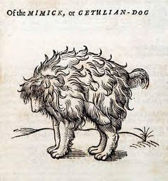 Mimick or Getulian-Dog. 1658. This woodcut is an illustration from the book The history of four-footed beasts and serpents... by Edward Topsell, printed by E. Cotes for G. Sawbridge, T. Williams and T. Johnson in London in 1658. Special Collections, University of Houston Libraries (Public Domain).
