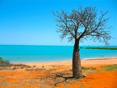A lone Baobab tree puts a great contrast in the scenery at Cable Beach, Broome. Broome Australia, Western Australia, Australia Travel, Le Baobab, Baobab Tree, Diy Outfits, Holiday Destinations, Travel Destinations, Diy Design