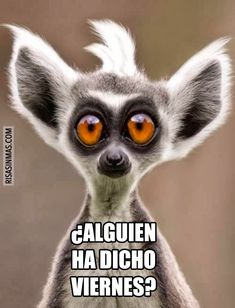 """¿Alguien ha dicho VIERNES? ~ """"Did someone say FRIDAY?"""" haha, gotta love Spanish. And this little guy. And Friday's! :)"""