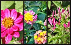 Best Annual Flowers for a Sunny Site