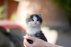 Tiny one...