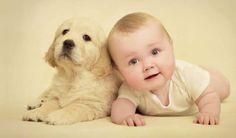As crianças e os animais de estimação. Quais são as melhores raças para os pequenos?