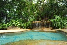 Backyard pool with small waterfall and sand-colored patio bordered by lush trees