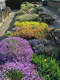 Alpine plants, RHS Wisley, UK