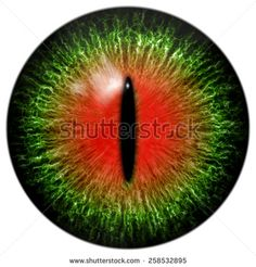Green red cat or reptile eye with narrow pupil - stock photo