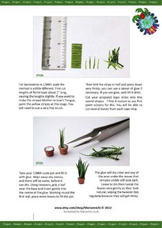 AIM January Supplement 2013 Issue 45.   Mother-in-Law's tongue plant.