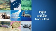 Species in the Spotlight: Survive to Thrive