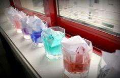 Durant les vacances vam fer també un experiment científic. Volíem aigua de colors, però com que on érem no teníem colorants ni aquarel·les l... Container, Vases, Science, Blue Prints, Vacation