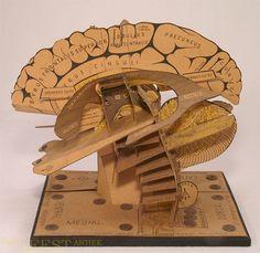 Paper + Book + Art | 紙 + 著作 + アート | книга + бумага + статья | Papier + Livre + Créations Artistiques | Carta + Libro + Arte | Van Lees Antiques Paper model of the brain.