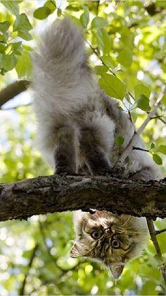 I bought a cat but got a monkey http://ift.tt/2iHag31