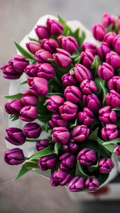 Wallpaper iPhone tulips ⚪️