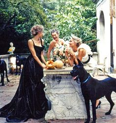 Formal Garden Party-looks like fun-love the dog! Weimaraner, Black Great Danes, Great Dane Puppy, Doberman Pinscher, Big Dogs, Doge, Beauty And The Beast, Dog Love, Snuggles