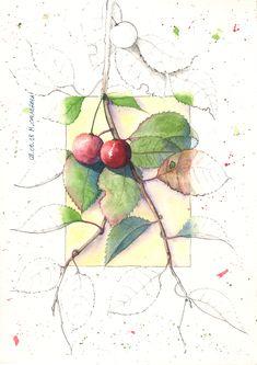 ramo di ciliege