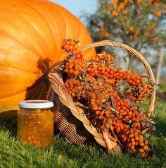 Tyhle recepty určitě musíte vyzkoušet. Rakytník je nabitý vitamíny a sirup i džem vám na podzim a v zimě pomohou bojovat proti chřipkám i nachlazení. Kimchi, Paella, Smoothie, Pumpkin, Herbs, Vegetables, Cooking, Ethnic Recipes, Sweet