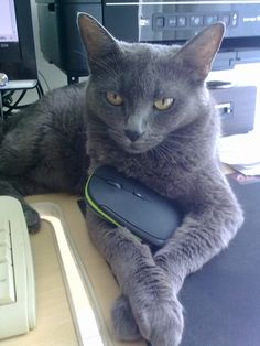 That´s MY mouse!
