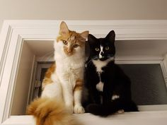 Gosh they are pretty (and I think they know it) by gdrouill cats kitten catsonweb cute adorable funny sleepy animals nature kitty cutie ca