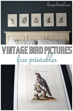 Great source for free printables: like these vintage birds, plus lots of other animal/nature pics