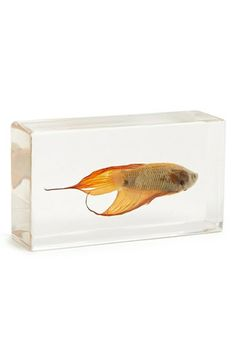 The Evolution Store Tropical Betta Fish in Resin available at #Nordstrom