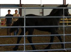 Chris Irwin teaches how to 'speak' horse in Lenoir City