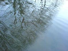23: reflection ripples tree water - helen birch