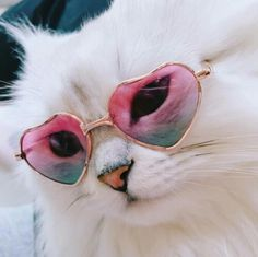 Discovered by RiRi. Find images and videos about cute, white and aesthetic on We Heart It - the app to get lost in what you love. Animals And Pets, Baby Animals, Funny Animals, Cute Animals, Crazy Cat Lady, Crazy Cats, I Love Cats, Cool Cats, Kittens Cutest