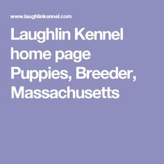 Laughlin Kennel home page  Puppies, Breeder, Massachusetts