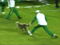 Dog gives soccer patrons more than they expected!