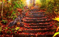 Autumn Wallpaper HD Wallpaper