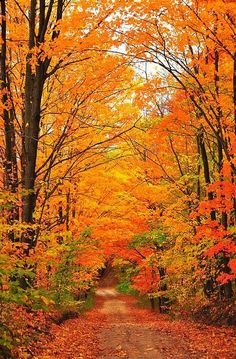 A country road wanders away into a tunnel of autumn trees. This image was captured in northern Michigan near Cadillac, Michigan, USA. www.aaa.com/travel