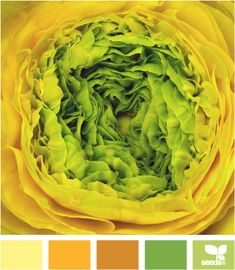 Want to find wool in the bright yellow colour!