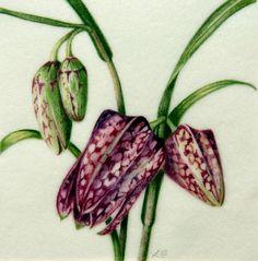 Botanical Watercolours  Fritillaria
