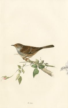 Meyer Bird Prints 1857