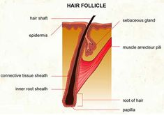 Dr Ajays Homeopathy  : Regrowing of  Hair With Homeopathy